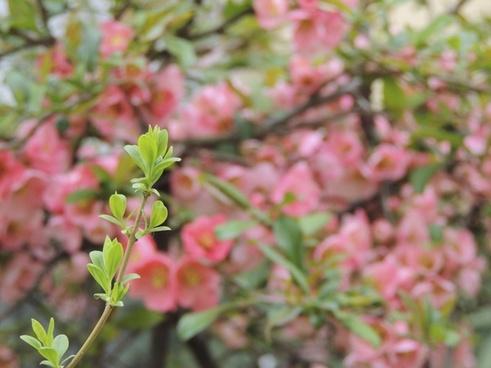 flower pink branch
