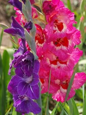 flower plant pink