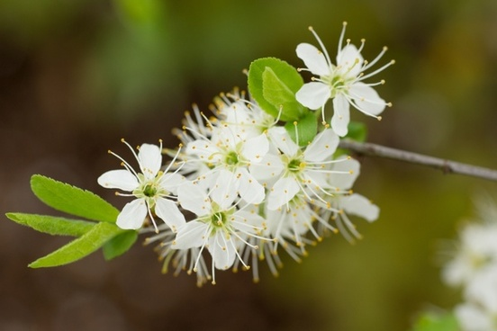 flower pollen bee pollen