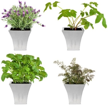 flower pot plants 02 hd pictures