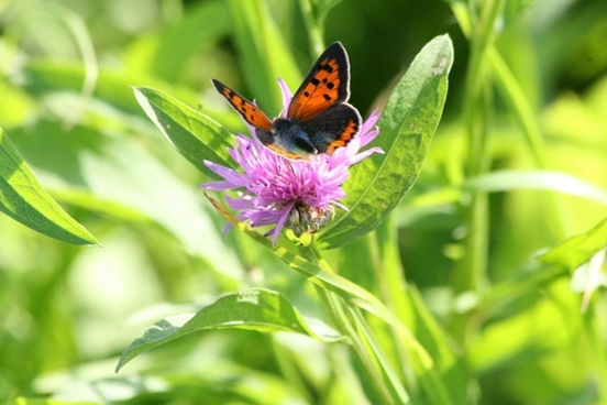 flower purple flower butterfly