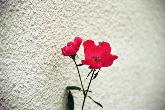 flower red flower flowers