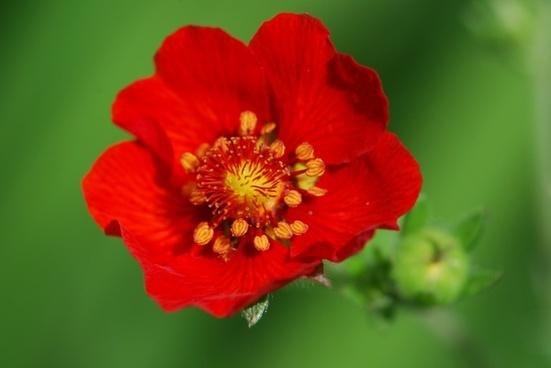 flower red green