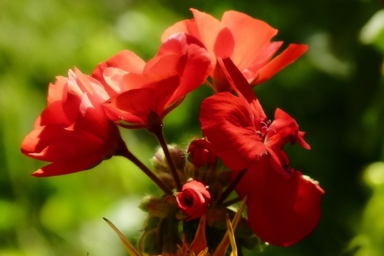 flower red nature