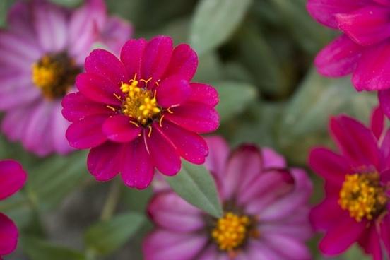 flower red red flower