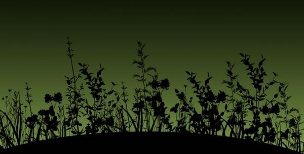 flower silhouette dusk