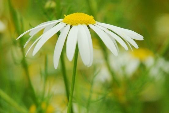 flower spring affection