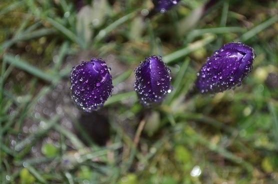 flower spring season