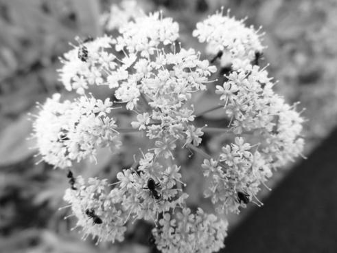 flower summer black amp white photography