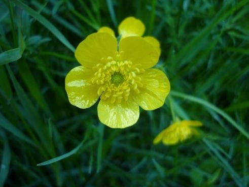 flower toxic yellow