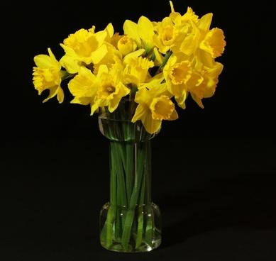 flower vase daffodils jonquil