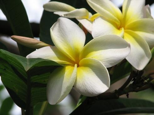 flower white flower yellow flower