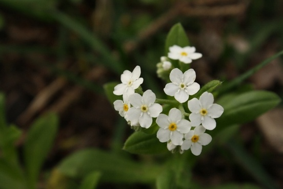 Small Size Flowers Free Stock Photos Download 16 555 Free Stock Photos For Commercial Use Format Hd High Resolution Jpg Images Sort By Unpopular First