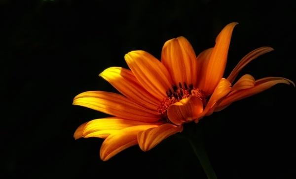 flower wild flower flowers