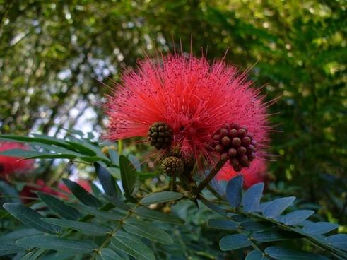 flower wild flower nature