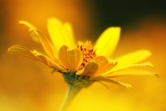 flower wild flower plant