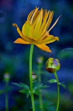 flower wild plants summer flowers