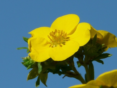 flower yellow close