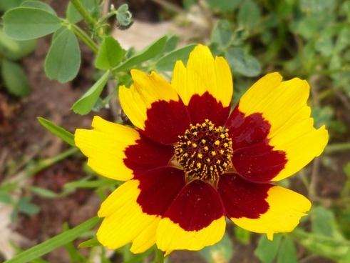 flower yellow red