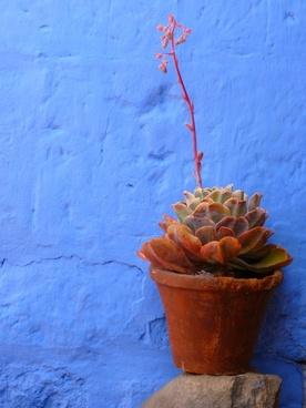 flowerpot plant decoration