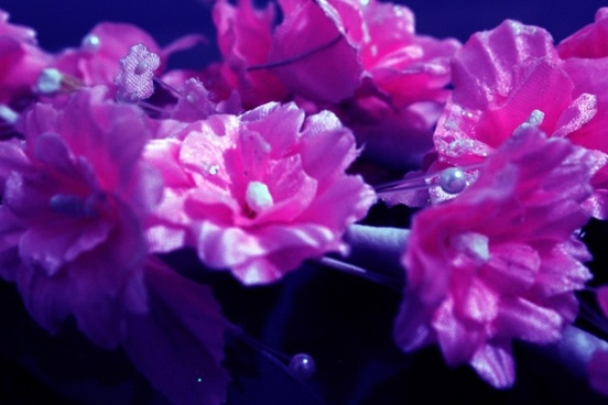 flowers 06