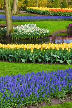 flowers at keukenhof