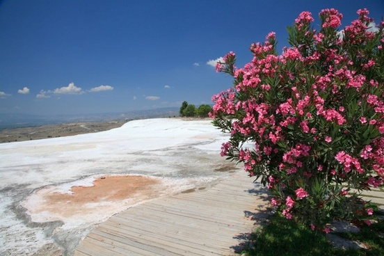 flowers at pamukkale