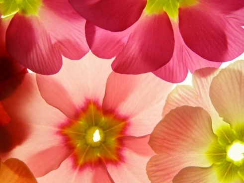 flowers background hd picture 2
