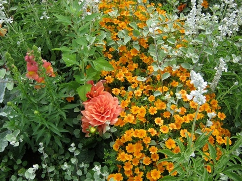 flowers bl�tenmeer