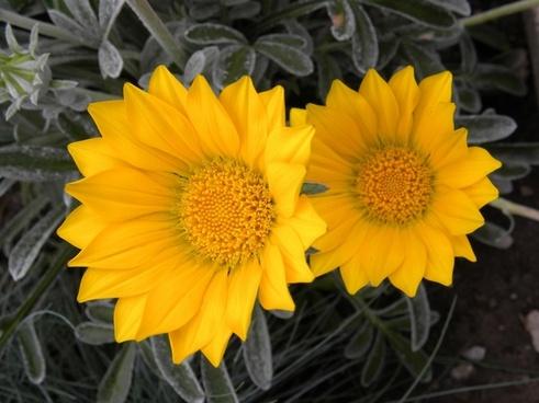 flowers close-up garden