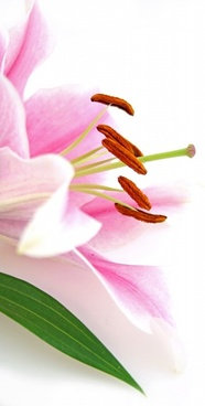 flowers closeup highdefinition picture