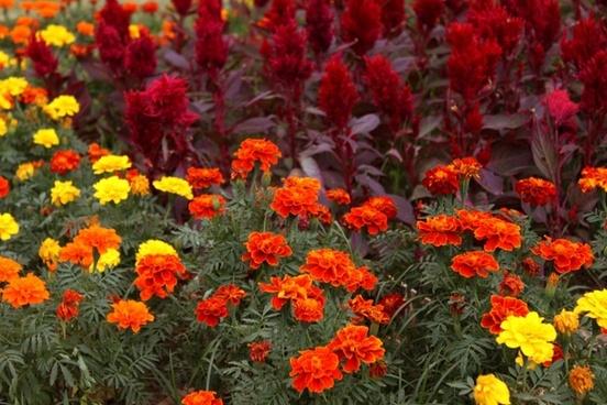 flowers colors flowering