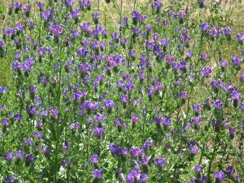flowers field field of flowers