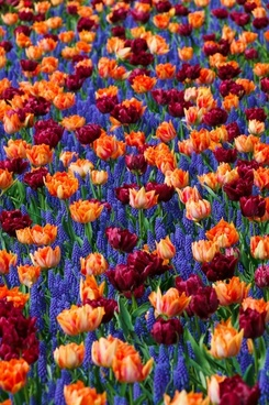 flowers flower bed