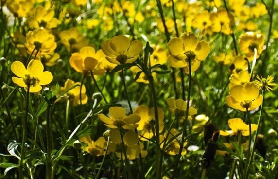 flowers flower plants