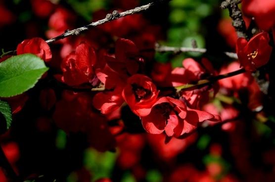flowers flower red flower