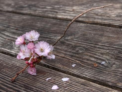 flowers flowering twig spring