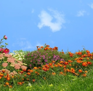 flowers grass sky picture