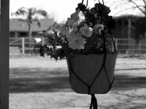 flowers in hanging pot