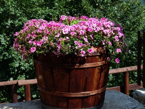 flowers pink container plant