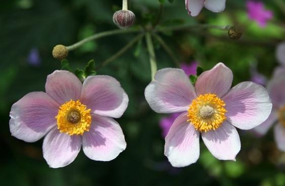 flowers pink garden