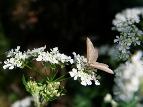 flowers plants butterfly