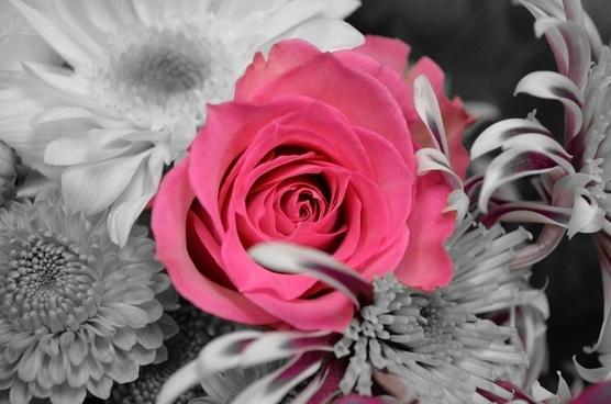 flowers plants rose