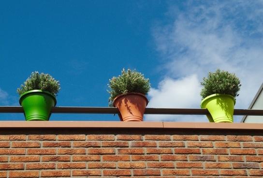 flowers pots sky