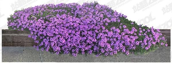 flowers psd layered 14