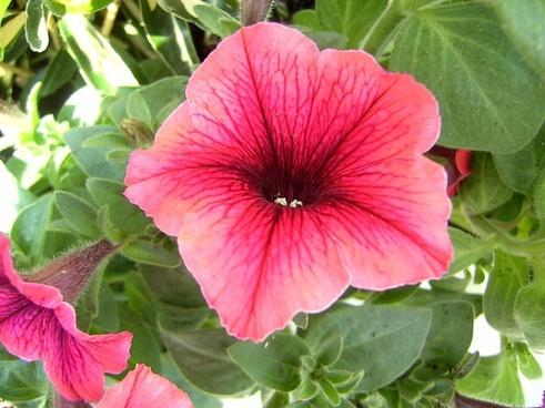 flowers red flower flora