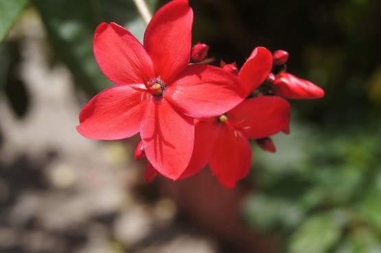 flowers red natural