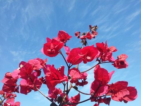flowers sky blue sky