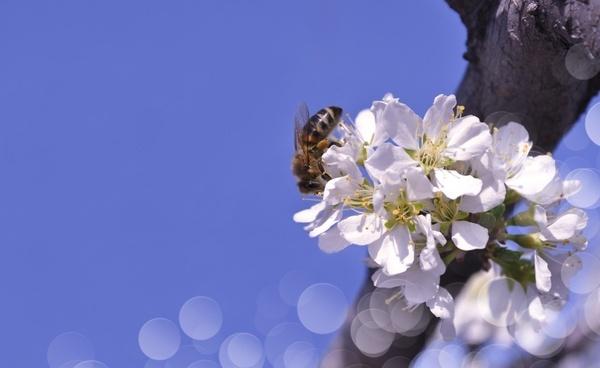 flowers spring tree