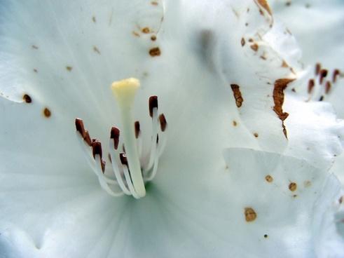 flowers stamens white